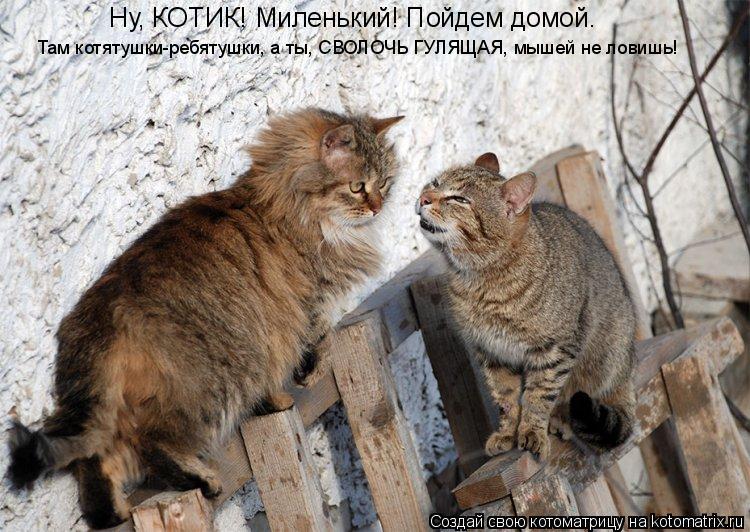 Котоматрица: Ну, КОТИК! Миленький! Пойдем домой. Там котятушки-ребятушки, а ты, СВОЛОЧЬ ГУЛЯЩАЯ, мышей не ловишь!