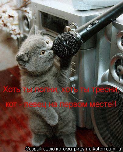 Котоматрица: Хоть ты лопни, хоть ты тресни, кот - певец на первом месте!!