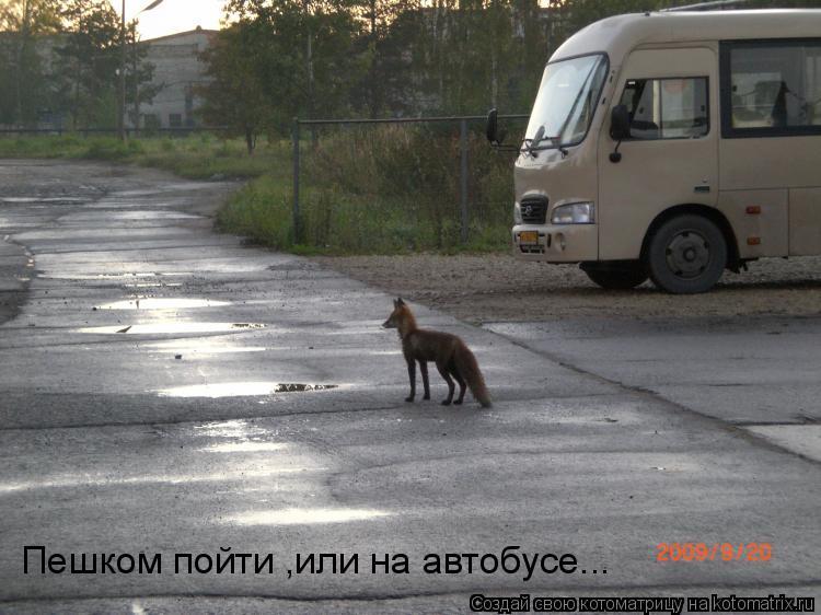 Котоматрица: Пешком пойти ,или на автобусе...
