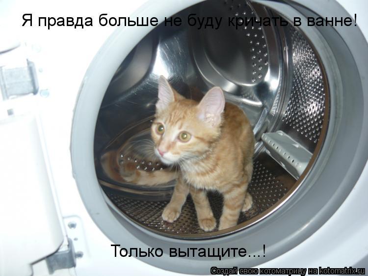 Котоматрица: Я правда больше не буду кричать в ванне! Только вытащите...!