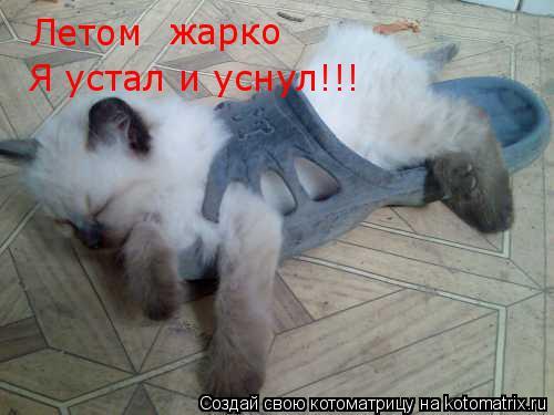 Котоматрица: Летом жарко Я устал и уснул!!!