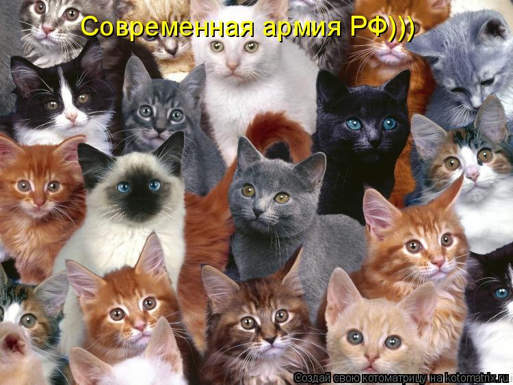 Котоматрица: Современная армия РФ)))