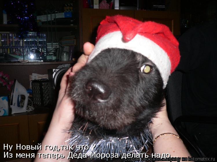 Котоматрица: Ну Новый год,так что ? Из меня теперь Деда Мороза делать надо...