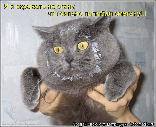 Котоматрица: И я скрывать не стану, что сильно полюбил сметану!!!