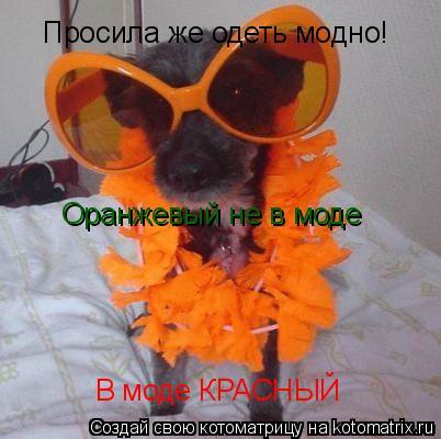 Котоматрица: Просила же одеть модно! Оранжевый не в моде В моде КРАСНЫЙ