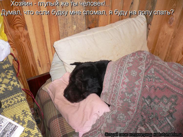 Котоматрица: Хозяин - глупый же ты человек!.. Думал, что если будку мне сломал, я буду на полу спать?