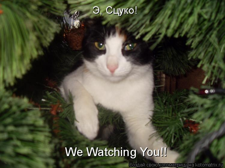 Котоматрица: Э, Сцуко! We Watching You!!