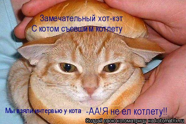 Котоматрица: Замечательный хот-кэт С котом съевшим котлету Мы взяли интервью у кота -АА!Я не ел котлету!!