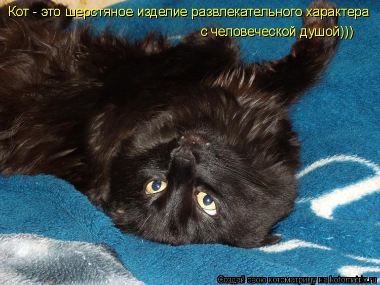 Котоматрица: Кот - это шерстяное изделие развлекательного характера с человеческой душой)))