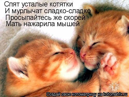 Котоматрица: Спят усталые котятки И мурлычат сладко-сладко Просыпайтесь же скорей Мать нажарила мышей
