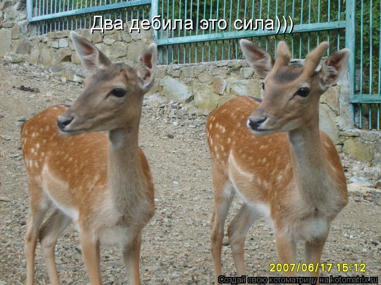 Котоматрица: Два дебила это сила)))