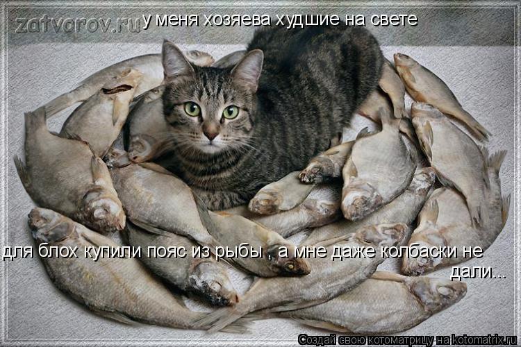 Котоматрица: у меня хозяева худшие на свете для блох купили пояс из рыбы , а мне даже колбаски не дали дали...