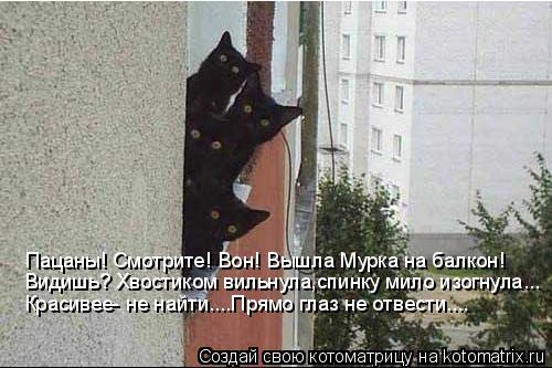 Котоматрица: Пацаны! Смотрите! Вон! Вышла Мурка на балкон! Видишь? Хвостиком вильнула,спинку мило изогнула... Красивее- не найти....Прямо глаз не отвести....
