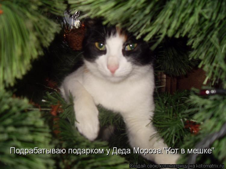"""Котоматрица: Подрабатываю подарком у Деда Мороза.""""Кот в мешке"""""""