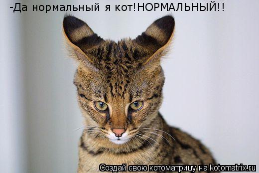 Котоматрица: -Да нормальный я кот!НОРМАЛЬНЫЙ!!