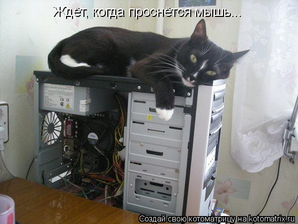 Котоматрица: Ждёт, когда проснётся мышь...