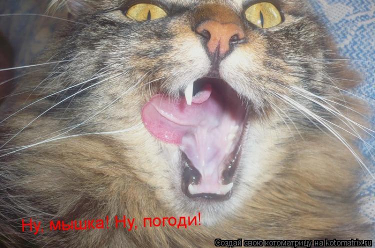 Котоматрица: Ну, мышка! Ну, погоди!