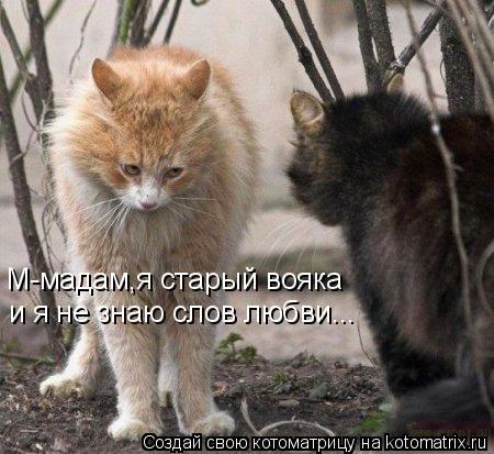 Котоматрица: М-мадам,я старый вояка и я не знаю слов любви...
