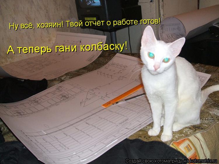 Котоматрица: Ну всё, хозяин! Твой отчёт о работе готов! А теперь гани колбаску!