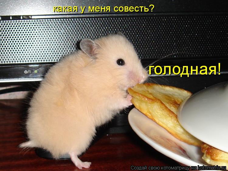 Котоматрица: какая у меня совесть? голодная!