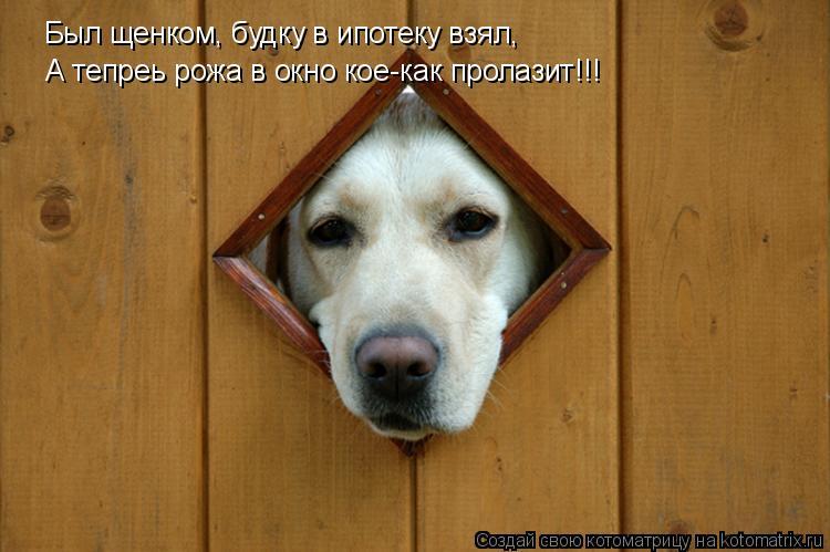 Котоматрица: Был щенком, будку в ипотеку взял, А тепреь рожа в окно кое-как пролазит!!!