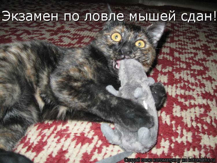 Котоматрица: Экзамен по ловле мышей сдан!