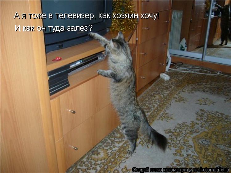Котоматрица: А я тоже в телевизер, как хозяин хочу! И как он туда залез?