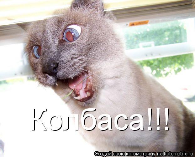 Котоматрица: Колбаса!!!