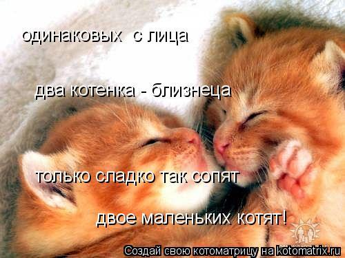 Котоматрица: одинаковых  с лица два котенка - близнеца только сладко так сопят двое маленьких котят!