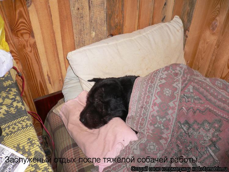 Котоматрица: Заслуженый отдых после тяжёлой собачей работы...