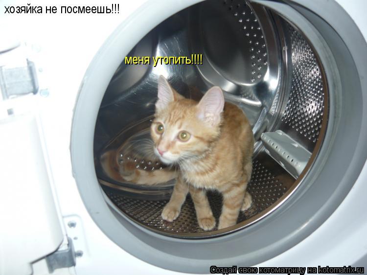Котоматрица: хозяйка не посмеешь!!! меня утопить!!!!