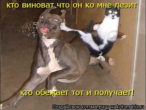 Котоматрица: кто виноват что он ко мне лезит кто обежает тот и получает!