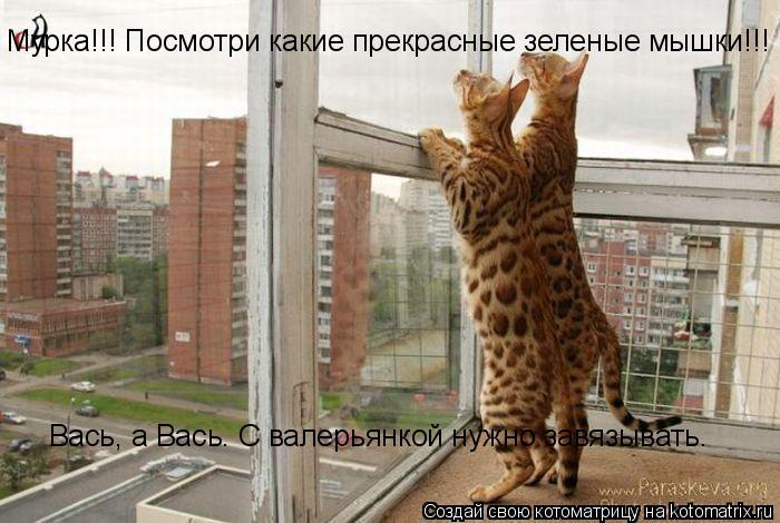 Котоматрица: Мурка!!! Посмотри какие прекрасные зеленые мышки!!! Вась, а Вась. С валерьянкой нужно завязывать.