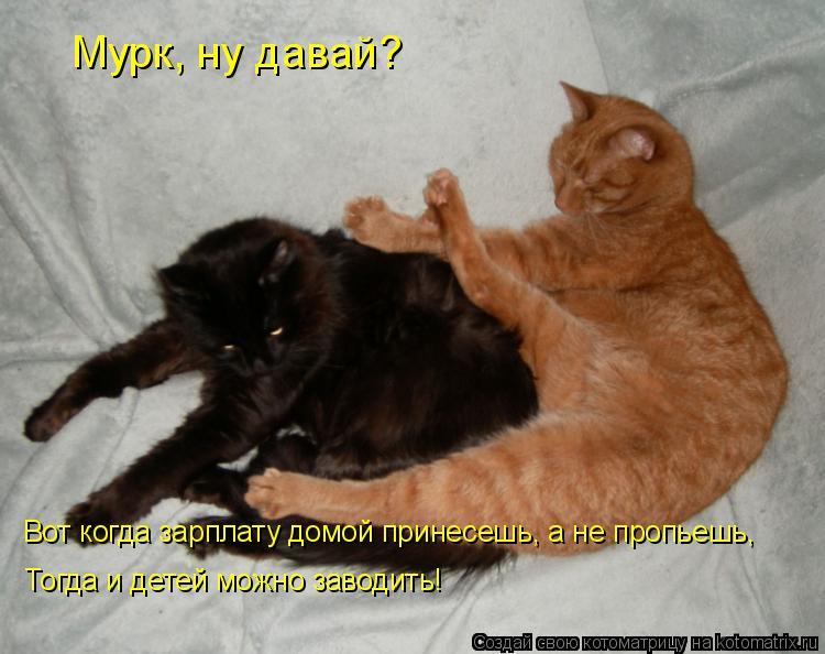 Котоматрица: Мурк, ну давай? Вот когда зарплату домой принесешь, а не пропьешь, Тогда и детей можно заводить!