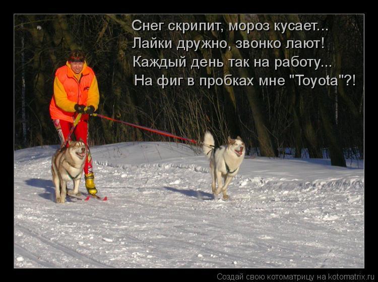 """Котоматрица: Снег скрипит, мороз кусает... Лайки дружно, звонко лают! Каждый день так на работу... На фиг в пробках мне """"Toyota""""?!"""