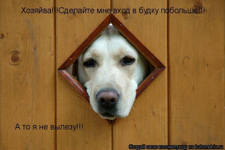 Котоматрица: Хозяйва!!!Сделайте мне вход в будку побольше!!! А то я не вылезу!!!