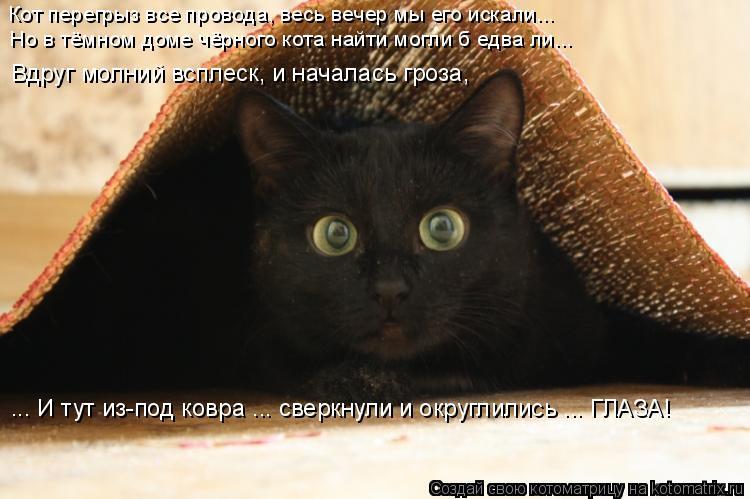 Котоматрица: Кот перегрыз все провода, весь вечер мы его искали... Но в тёмном доме чёрного кота найти могли б едва ли... ... И тут из-под ковра ... сверкнули и