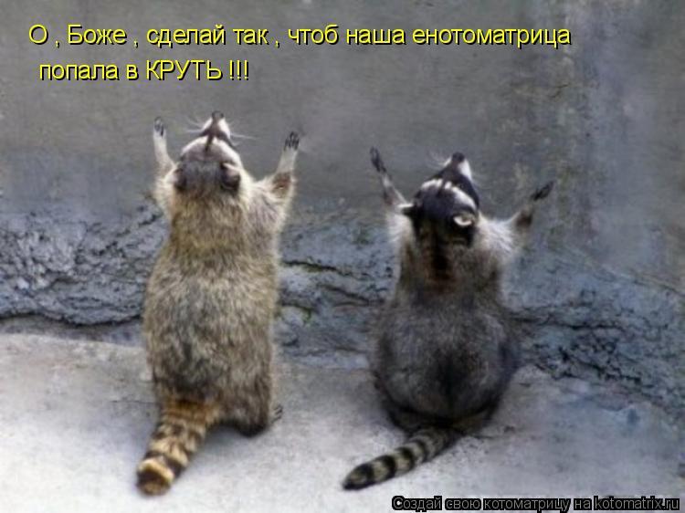 Котоматрица: О , Боже , сделай так , чтоб наша енотоматрица  попала в КРУТЬ !!!