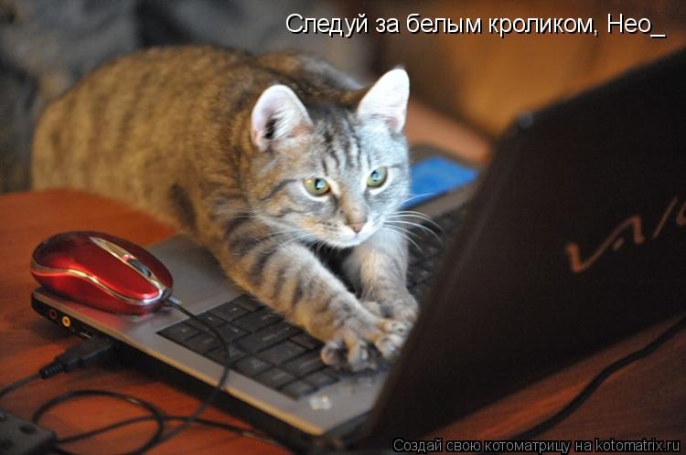 Котоматрица: Следуй за белым кроликом, Нео_