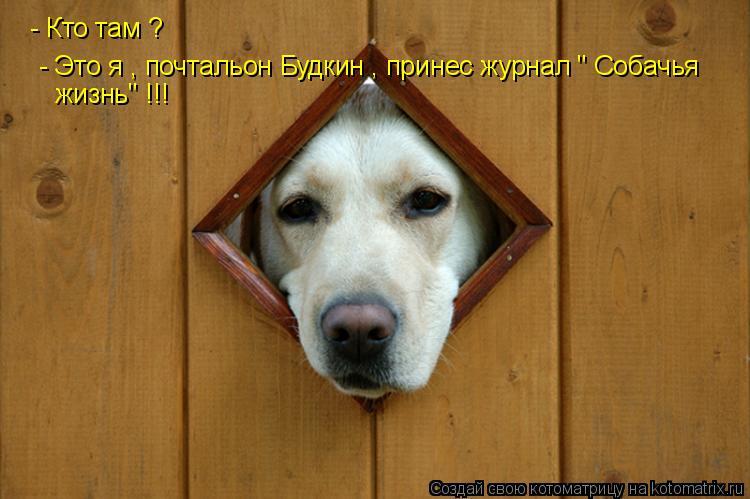 """Котоматрица: - Кто там ?  - Это я , почтальон Будкин , принес журнал """" Собачья  жизнь"""" !!!"""
