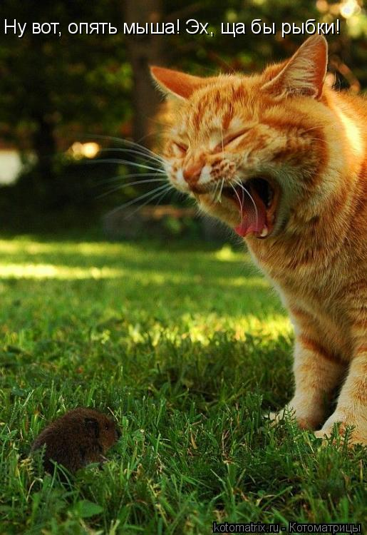 Котоматрица: Ну вот, опять мыша! Эх, ща бы рыбки!
