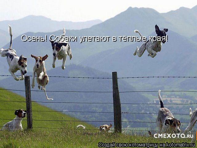 Котоматрица: Осень! Собаки улетают в тёплые края!