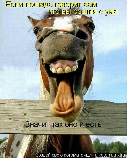 Котоматрица: Если лошадь говорит вам, что вы сошли с ума... Значит так оно и есть.