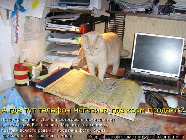 Котоматрица: приследоваться законом и мной! поэтому всякого рода копирование фотки будет лично Антону Васильевичу Муркину (на снимке), Предупреждение!