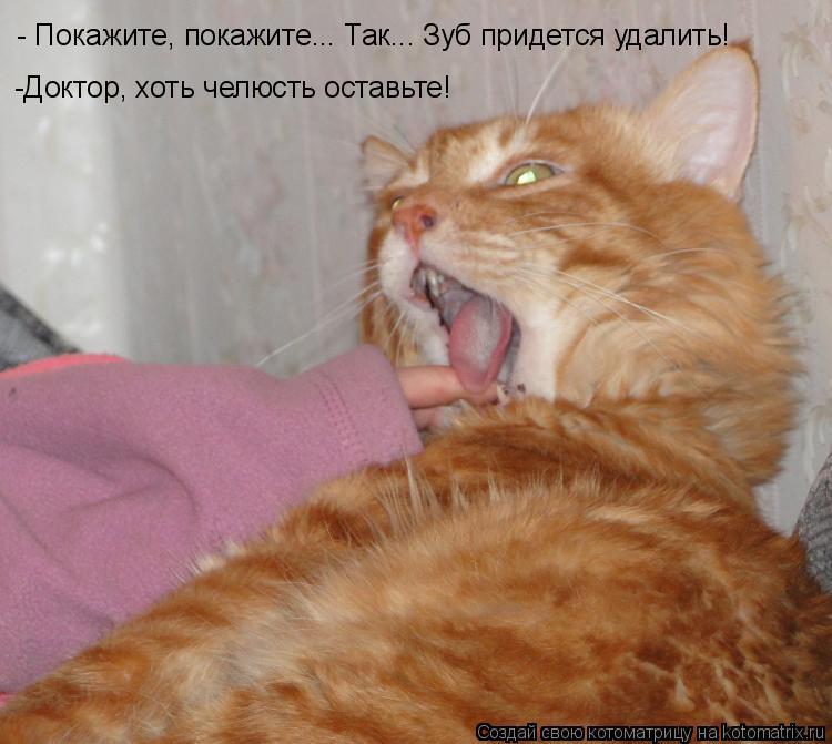 Котоматрица: - Покажите, покажите... Так... Зуб придется удалить! -Доктор, хоть челюсть оставьте!