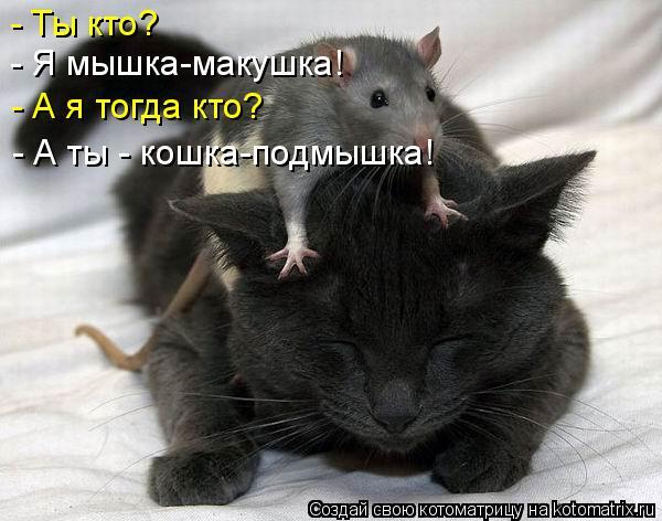 Котоматрица: - Ты кто? - Я мышка-макушка! - А я тогда кто? - А ты - кошка-подмышка!
