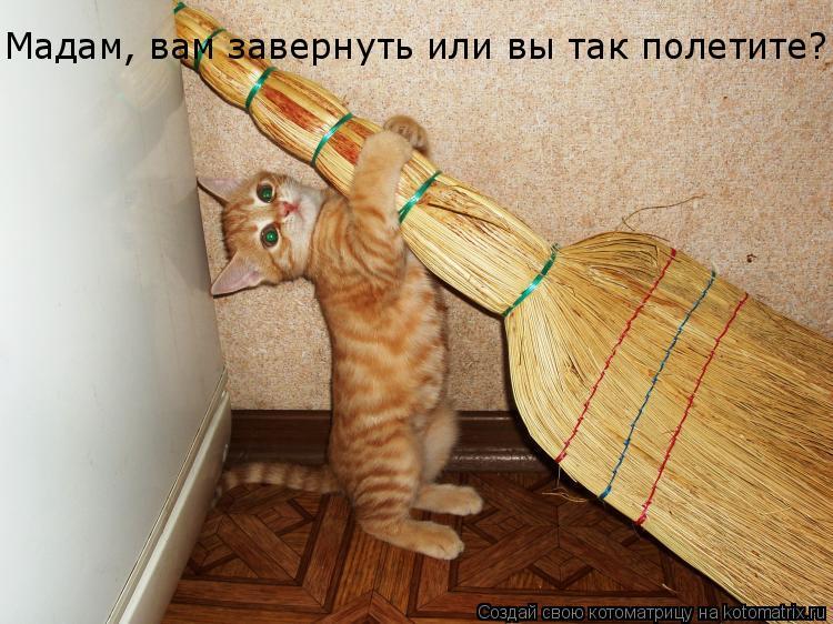 Котоматрица: Мадам, вам завернуть или вы так полетите?