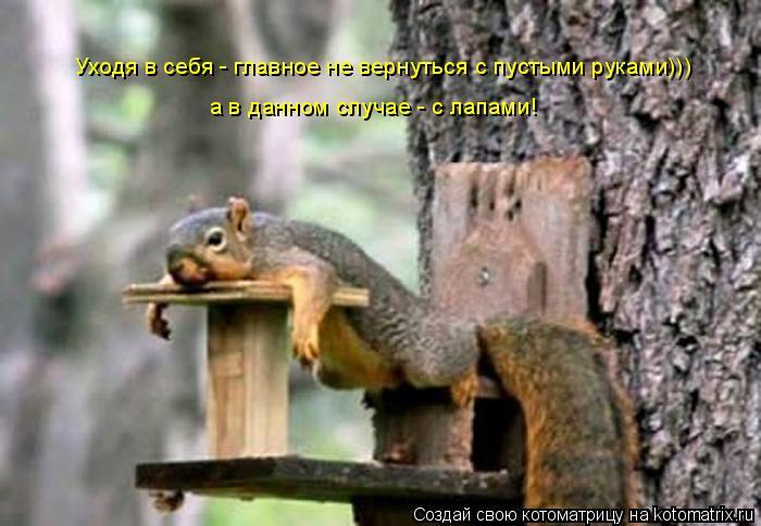 Котоматрица: Уходя в себя - главное не вернуться с пустыми руками)))  а в данном случае - с лапами!