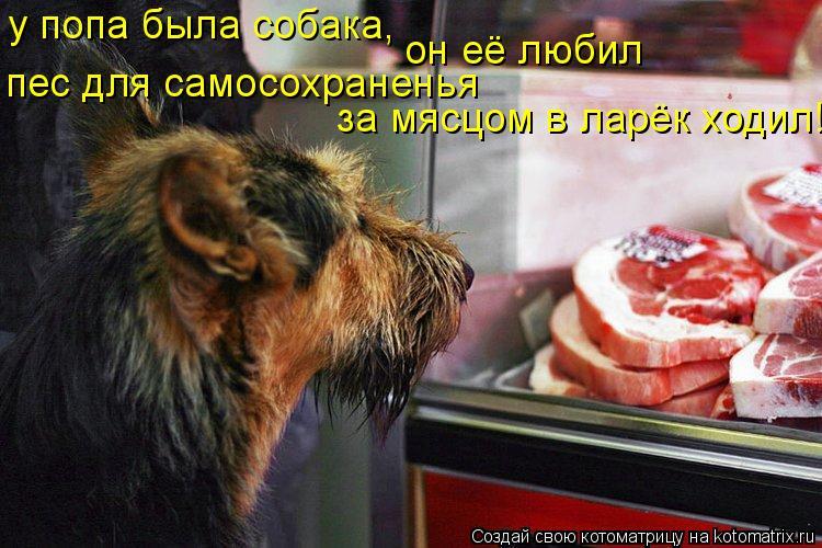 Котоматрица: у попа была собака, он её любил пес для самосохраненья  за мясцом в ларёк ходил!