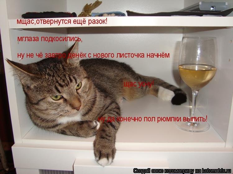 Котоматрица: мщас,отвернутся ещё разок! мглаза подкосились, ну не чё завтро денёк с нового листочка начнём щас усну! ну да конечно пол рюмпки выпить!